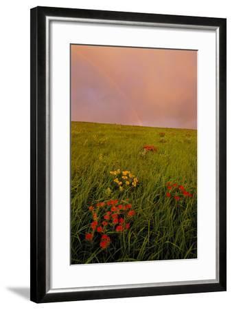 A Rainbow Above the Prairie at Sunrise-Michael Forsberg-Framed Photographic Print