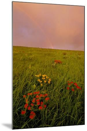 A Rainbow Above the Prairie at Sunrise-Michael Forsberg-Mounted Photographic Print