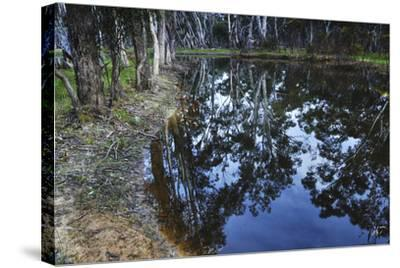 Tree Reflections, Grampians National Park, Australia-Keith Ladzinski-Stretched Canvas Print