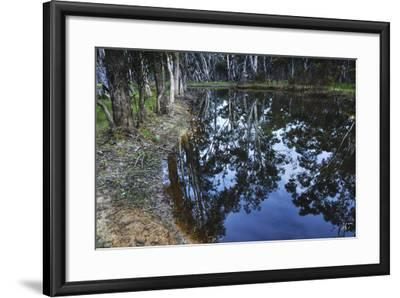 Tree Reflections, Grampians National Park, Australia-Keith Ladzinski-Framed Photographic Print