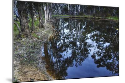 Tree Reflections, Grampians National Park, Australia-Keith Ladzinski-Mounted Photographic Print