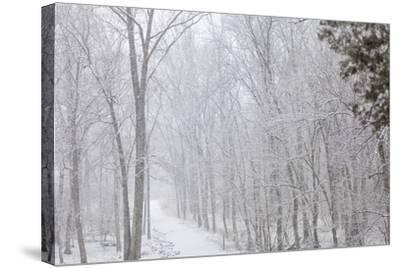 Winter Snowstorm on Manassas National Battlefield Park's Stone Bridge Trail in Virginia-Hannele Lahti-Stretched Canvas Print
