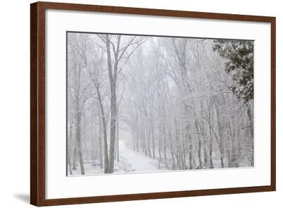 Winter Snowstorm on Manassas National Battlefield Park's Stone Bridge Trail in Virginia-Hannele Lahti-Framed Photographic Print