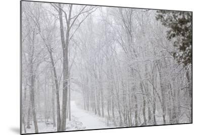 Winter Snowstorm on Manassas National Battlefield Park's Stone Bridge Trail in Virginia-Hannele Lahti-Mounted Photographic Print