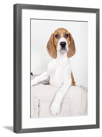 Portrait of an Adorable Coon Hound Puppy, Available for Adoption-Hannele Lahti-Framed Photographic Print