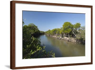 A Mangrove Forest Along an Inlet on Vansittart Bay, Western Australia-Jeff Mauritzen-Framed Photographic Print