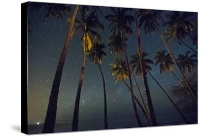 Starry Night in the Kapuaiwa Coconut Grove, Molokai-Jonathan Kingston-Stretched Canvas Print
