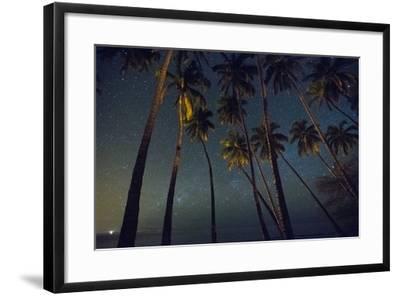 Starry Night in the Kapuaiwa Coconut Grove, Molokai-Jonathan Kingston-Framed Photographic Print