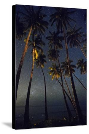 Starry Night in the Kapuaiwa Coconut Grove, Molokai-Jonathan Kingston-Stretched Canvas Print