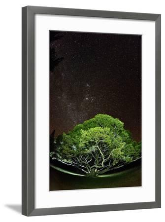 The Starry Sky of the Milky Way Is Visible over a Fig Tree on the Island of Molokai, Hawaii-Jonathan Kingston-Framed Photographic Print