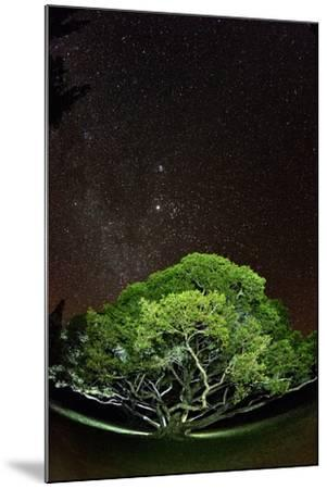 The Starry Sky of the Milky Way Is Visible over a Fig Tree on the Island of Molokai, Hawaii-Jonathan Kingston-Mounted Photographic Print