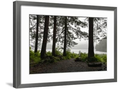 Along a Tree-Lined Trail, a Lookout Offers Views over the Water-Eric Kruszewski-Framed Photographic Print