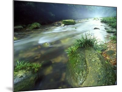 Crystal Clear Water Flows Through the Lush Canyon of Zhangjiajie Forest, China-Keith Ladzinski-Mounted Photographic Print