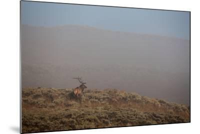 An Elk Stands on a Hill in Thick Fog-Tom Murphy-Mounted Premium Photographic Print