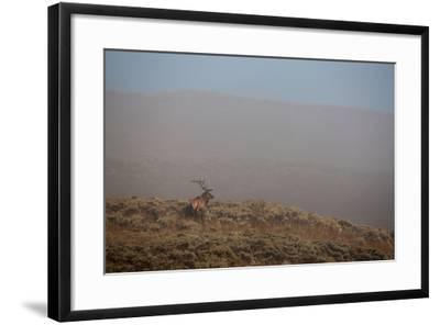 An Elk Stands on a Hill in Thick Fog-Tom Murphy-Framed Photographic Print