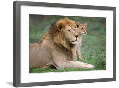 African Lion (Panthera Leo) with its Cub, Ndutu, Ngorongoro Conservation Area, Tanzania--Framed Photographic Print