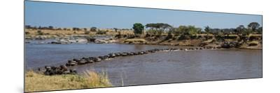 Wildebeests (Connochaetes Taurinus) Crossing a River, Serengeti National Park, Tanzania--Mounted Photographic Print