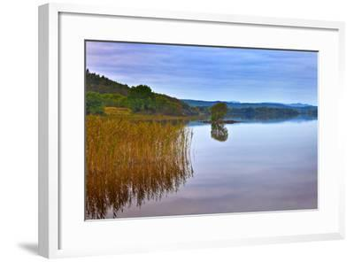Reeds and an Islet in Lough Macnean, County Fermanagh, Northern Ireland--Framed Photographic Print