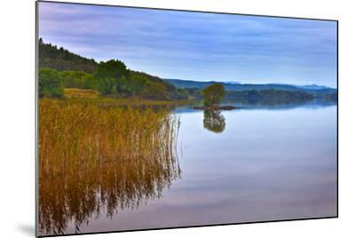 Reeds and an Islet in Lough Macnean, County Fermanagh, Northern Ireland--Mounted Photographic Print