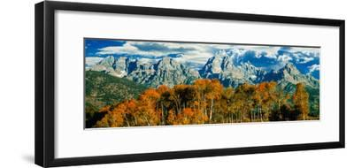 Aspen Trees in a Forest, Teton Range, Grand Teton National Park, Wyoming, Usa--Framed Photographic Print