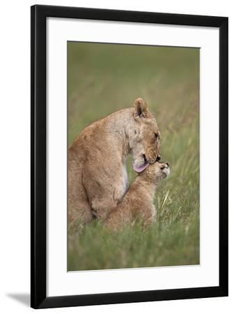 Lion (Panthera Leo) Female Grooming a Cub, Ngorongoro Crater, Tanzania, East Africa, Africa-James Hager-Framed Photographic Print