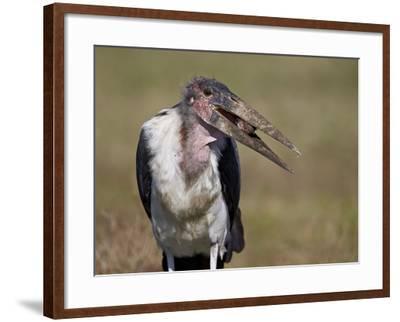 Marabou Stork (Leptoptilos Crumeniferus)-James Hager-Framed Photographic Print