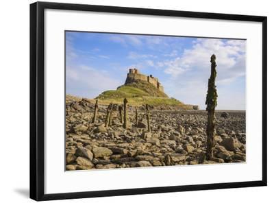 Lindisfarne Castle, Holy Island, Northumberland, England, United Kingdom, Europe-Gary Cook-Framed Photographic Print