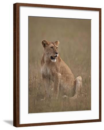 Lioness (Panthera Leo), Serengeti National Park, Tanzania, East Africa, Africa-James Hager-Framed Photographic Print