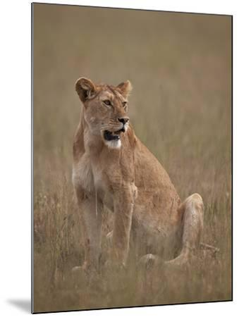 Lioness (Panthera Leo), Serengeti National Park, Tanzania, East Africa, Africa-James Hager-Mounted Photographic Print