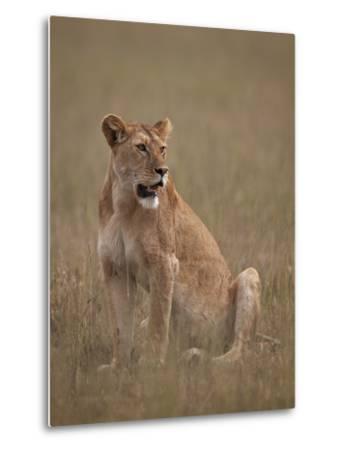 Lioness (Panthera Leo), Serengeti National Park, Tanzania, East Africa, Africa-James Hager-Metal Print