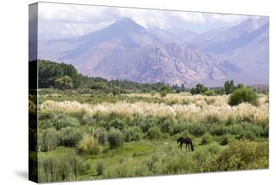 Landscape in the Andes, Argentina-Peter Groenendijk-Stretched Canvas Print