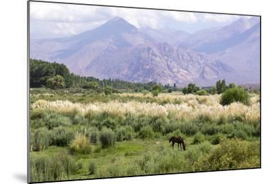 Landscape in the Andes, Argentina-Peter Groenendijk-Mounted Photographic Print