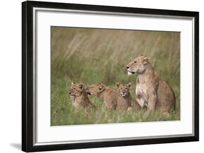 Lion (Panthera Leo) Female and Three Cubs, Ngorongoro Crater, Tanzania, East Africa, Africa-James Hager-Framed Photographic Print