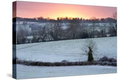 Winter Trees and Fields in Dawn Frost, Stow-On-The-Wold, Gloucestershire, Cotswolds, England, UK-Stuart Black-Stretched Canvas Print