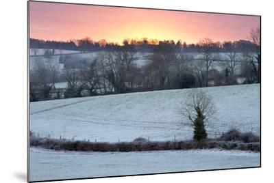 Winter Trees and Fields in Dawn Frost, Stow-On-The-Wold, Gloucestershire, Cotswolds, England, UK-Stuart Black-Mounted Photographic Print