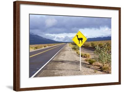 Guanaco Sign, Argentina-Peter Groenendijk-Framed Photographic Print
