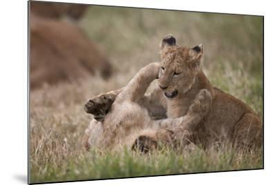 Lion (Panthera Leo) Cubs Playing, Ngorongoro Crater, Tanzania, East Africa, Africa-James Hager-Mounted Photographic Print