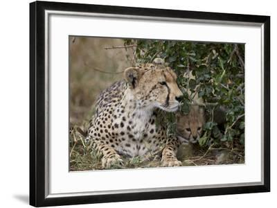 Cheetah (Acinonyx Jubatus) Mother and Cub-James Hager-Framed Photographic Print