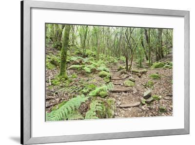 Laurel Forest, Laurisilva, Parque Nacional De Garajonay, La Gomera, Canary Islands, Spain, Europe-Markus Lange-Framed Photographic Print