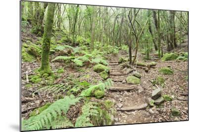 Laurel Forest, Laurisilva, Parque Nacional De Garajonay, La Gomera, Canary Islands, Spain, Europe-Markus Lange-Mounted Photographic Print