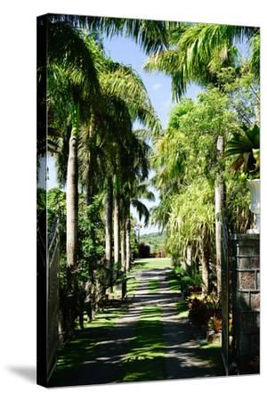 Nevis Botanical Garden, Nevis, St. Kitts and Nevis-Robert Harding-Stretched Canvas Print