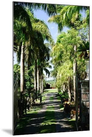 Nevis Botanical Garden, Nevis, St. Kitts and Nevis-Robert Harding-Mounted Photographic Print
