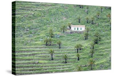 Finca, Palm Grove, Near Alajero, La Gomera, Canary Islands, Spain, Europe-Markus Lange-Stretched Canvas Print