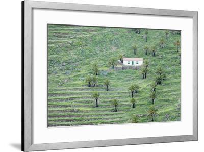 Finca, Palm Grove, Near Alajero, La Gomera, Canary Islands, Spain, Europe-Markus Lange-Framed Photographic Print
