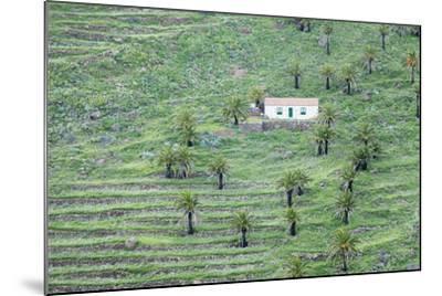 Finca, Palm Grove, Near Alajero, La Gomera, Canary Islands, Spain, Europe-Markus Lange-Mounted Photographic Print