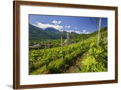The Church of Bianzone Seen from the Green Vineyards of Valtellina, Lombardy, Italy, Europe-Roberto Moiola-Framed Photographic Print