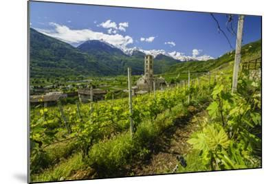 The Church of Bianzone Seen from the Green Vineyards of Valtellina, Lombardy, Italy, Europe-Roberto Moiola-Mounted Photographic Print