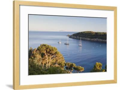 Sailing Boats in the Bay of Fetovaia at Sunset, Island of Elba, Livorno Province, Tuscany, Italy-Markus Lange-Framed Photographic Print