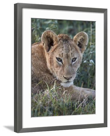 Lion (Panthera Leo) Cub, Ngorongoro Crater, Tanzania, East Africa, Africa-James Hager-Framed Photographic Print