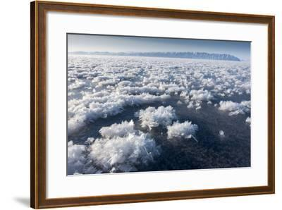 Frost Flowers Formed on Thin Sea Ice When the Atmosphere Is Much Colder Than the Underlying Ice-Louise Murray-Framed Photographic Print